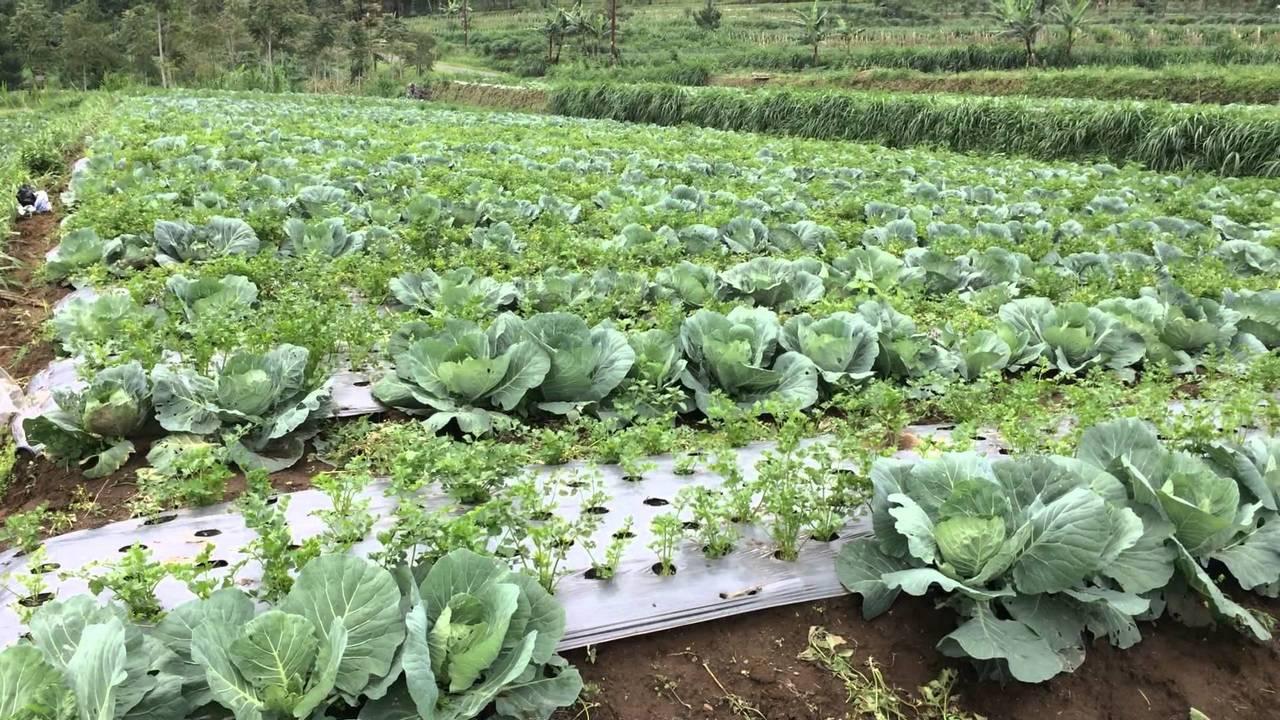 История просихождения органических удобрений