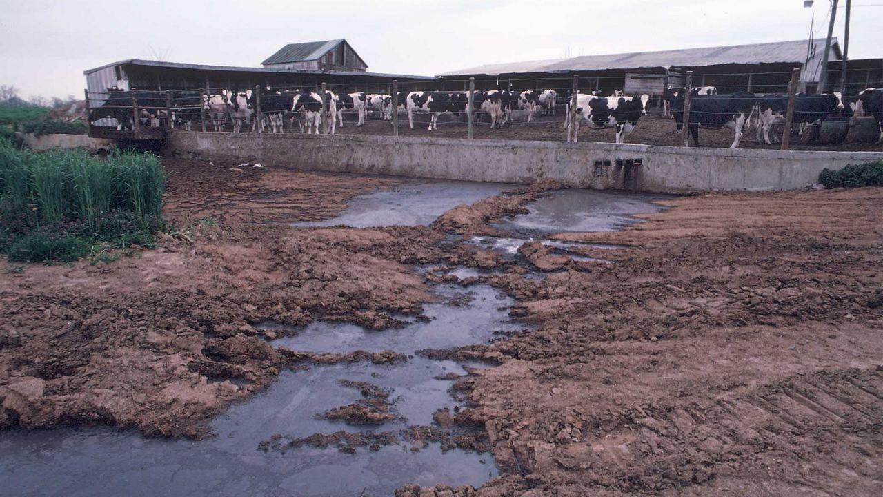 Дезактивации отходов животноводческих комплексов