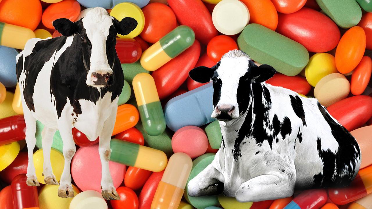 Иммуномодуляторы для животных
